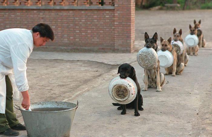 Cina: cane poliziotto in fila per il cibo