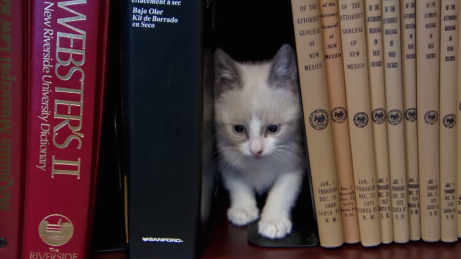 Biblioteca gatto