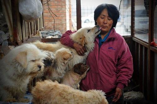 Donna cinese salva cani da macellazione