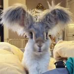 coniglietto fa impazzire il web