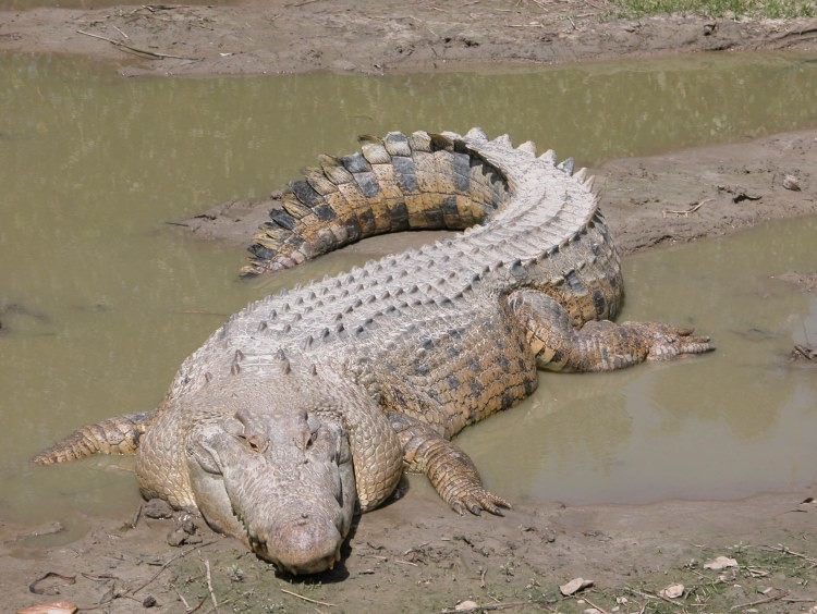 L'isola dei coccodrilli