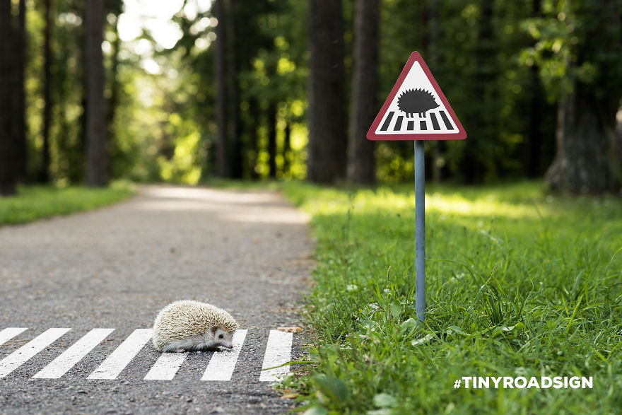 TINYROADSIGN-road-signs-for-animals__880 (1)