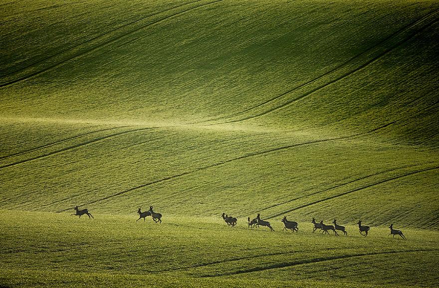 campi della moravia 4