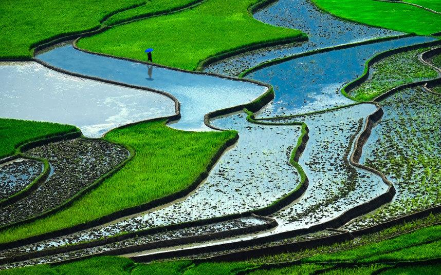 ricefield-vietnam_3210593k