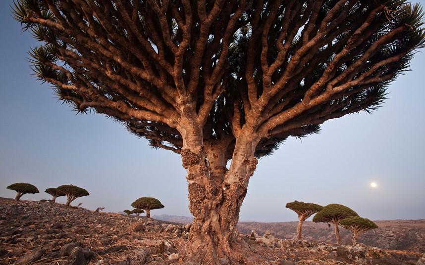 trees-CY2XDA_2697676k