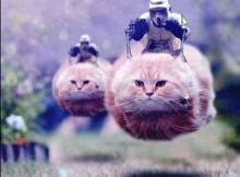 gattini bruxelles polizia belgio