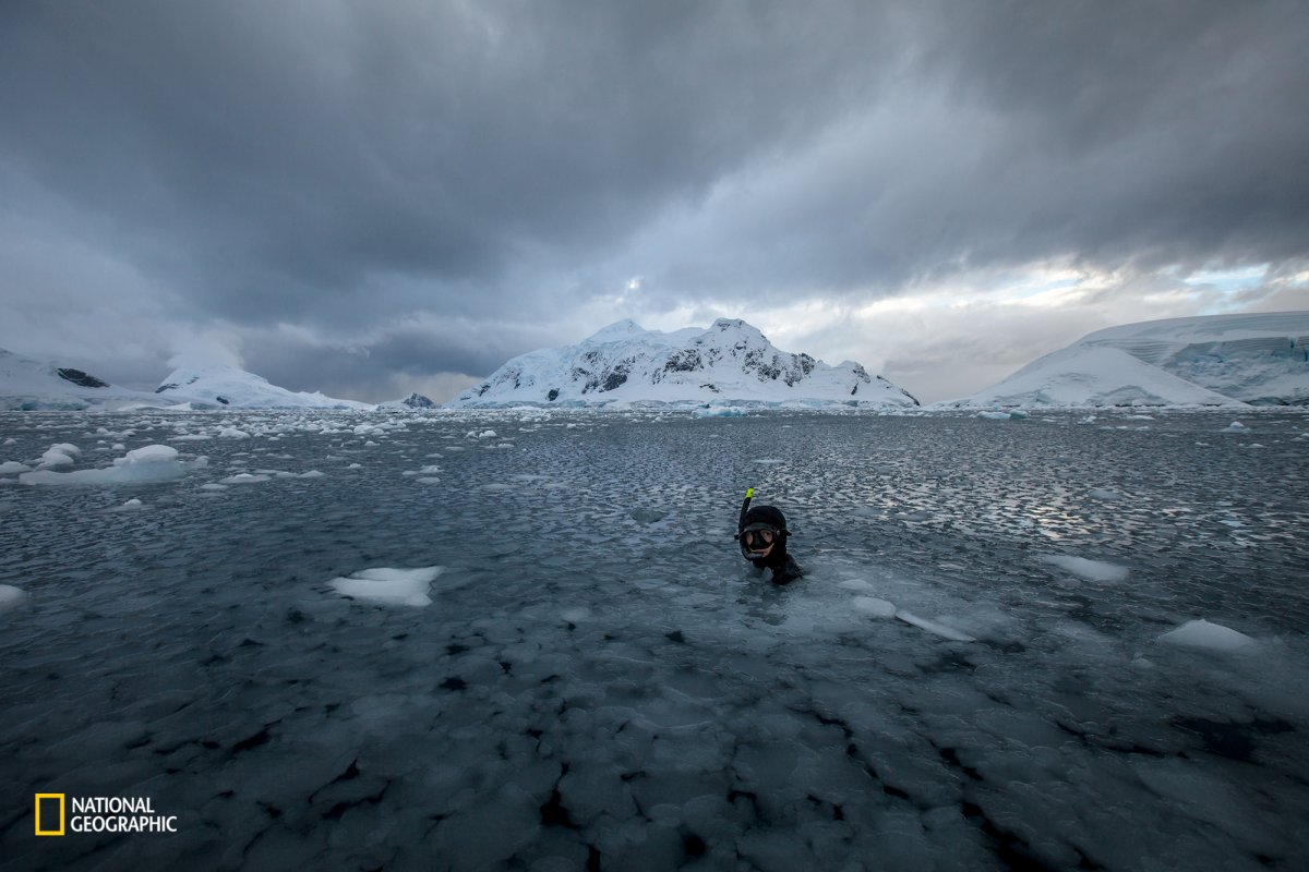 a-diver-prepares-for-a-freediving-session-in-snow-hill-antarctica