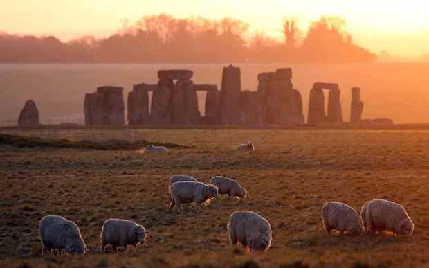 Sheep_grazing_in_a_3526412b