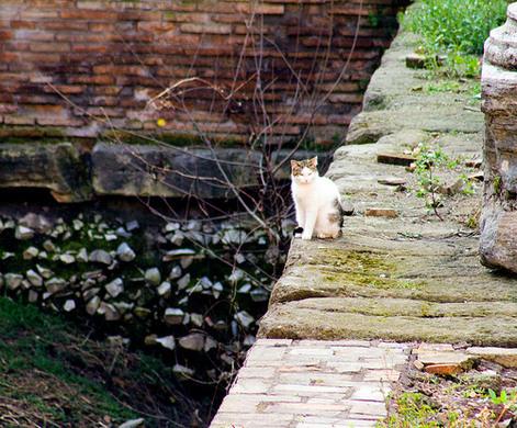 gatti-roma-1