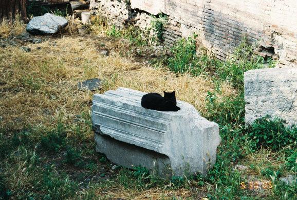 gatti-roma-10