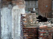 gatti-roma-8