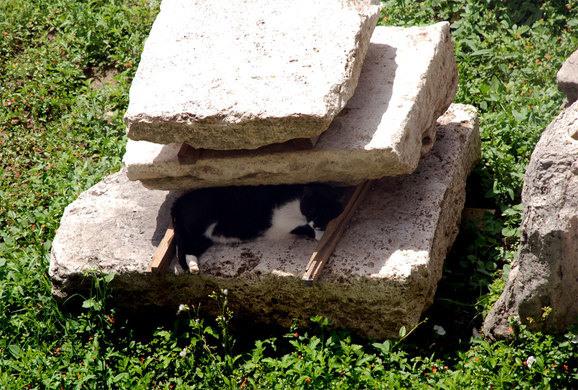 gatti-roma-9