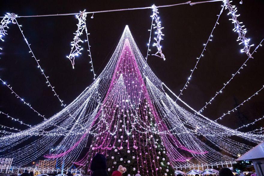 albero vilnius 10