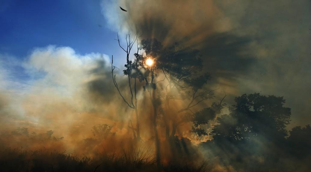 Il consumo di carne: la causa principale degli incendi in Amazzonia